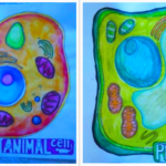 Student drawings of animal and plant cells in the arts-integrated life science class